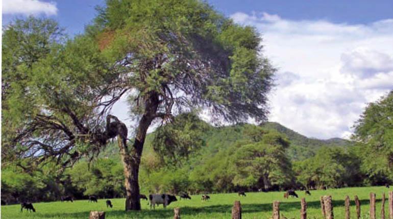 Santa Cruz con el 29 por ciento del Producto Interno Bruto boliviano