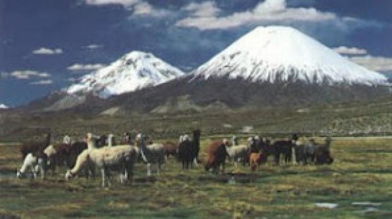 Organización Mundial de Sanidad Animal declara al altiplano libre de ...