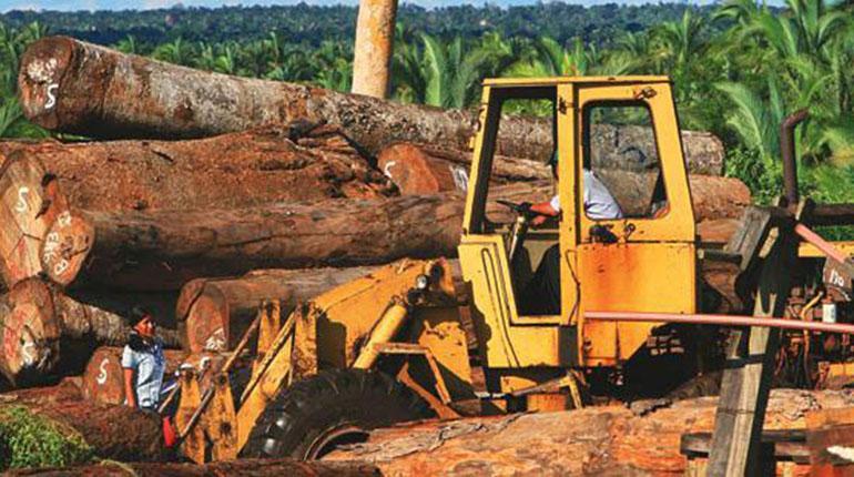 ABT abre la posibilidad de autorizar exportación de madera en troncas