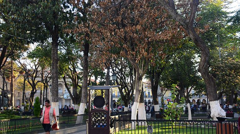 Magnolias se mueren a pesar de tratamiento los tiempos for Vivero las magnolias