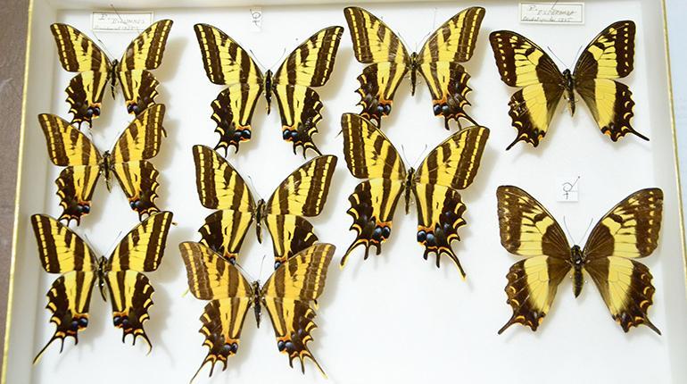 Mariposas bolivianas | Los Tiempos