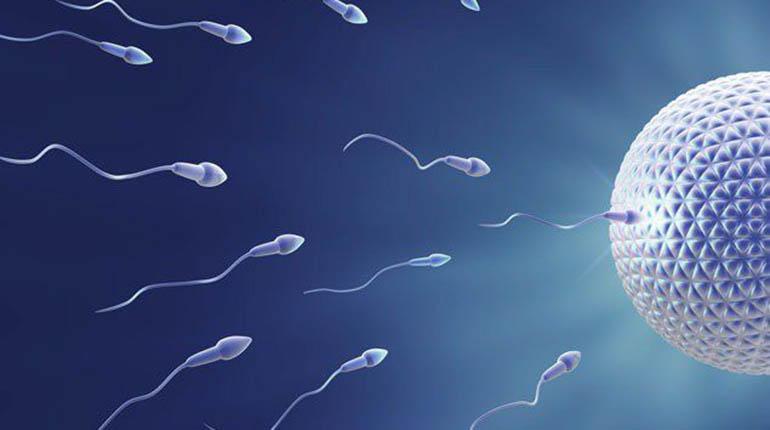 Será posible fabricar esperma en laboratorios | Los Tiempos