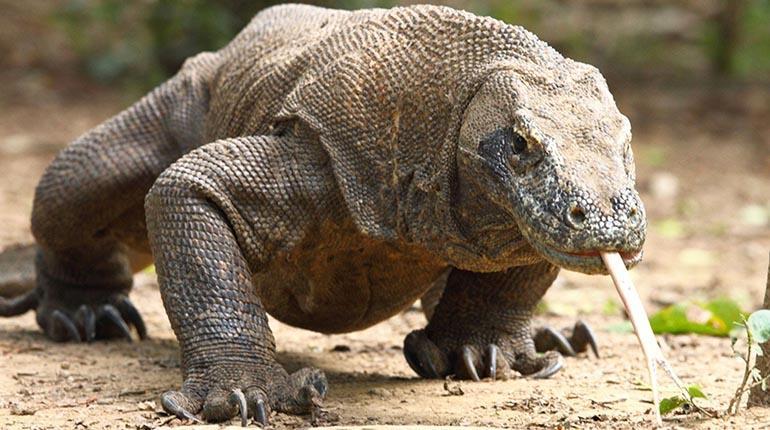 Los 12 Animales Mas Venenosos Del Mundo Los Tiempos