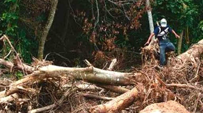 Desmonte de bosque en Santa Cruz. | AGENCIAS