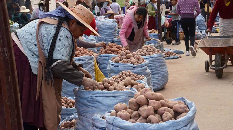 Por déficit, Bolivia importó 4.600 T de papa peruana en 2018