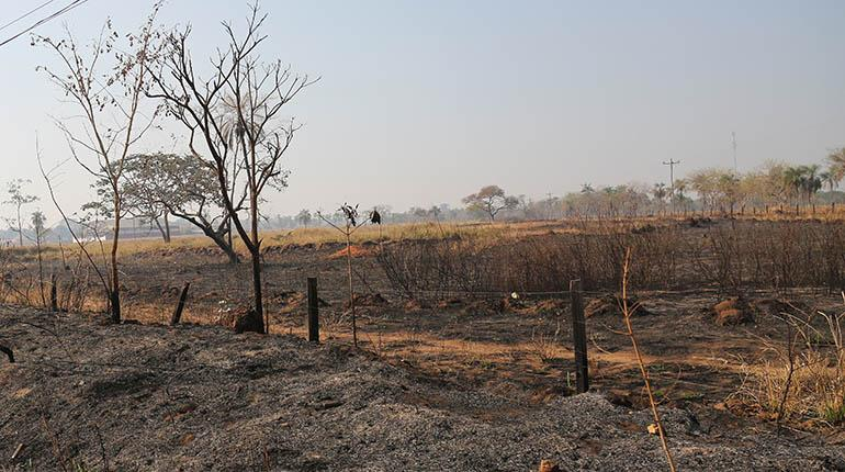 70-del-area-quemada-coincide-con-avance-de-frontera-agropecuaria