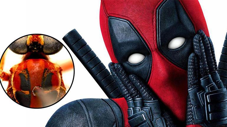Nombres De Superhéroes De Marvel Para Insectos Descubiertos En Australia Los Tiempos